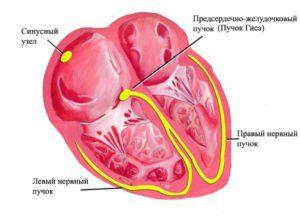 Лечение стенокардии народными средствами и методами
