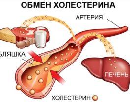 Как происходит обмен холестерина