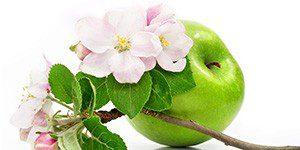 Отвар из цветов яблони