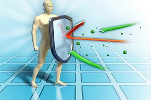 Цикорий польза и вред для организма