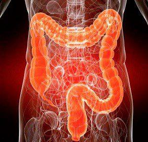 Нормальное функционирование кишечника