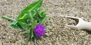 Сабельник болотный: полезные свойства и противопоказания