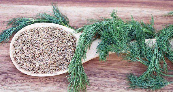Укроп и семена