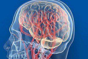 Кровообращение вголовном мозге